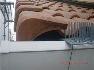 屋根の中に鳥の巣