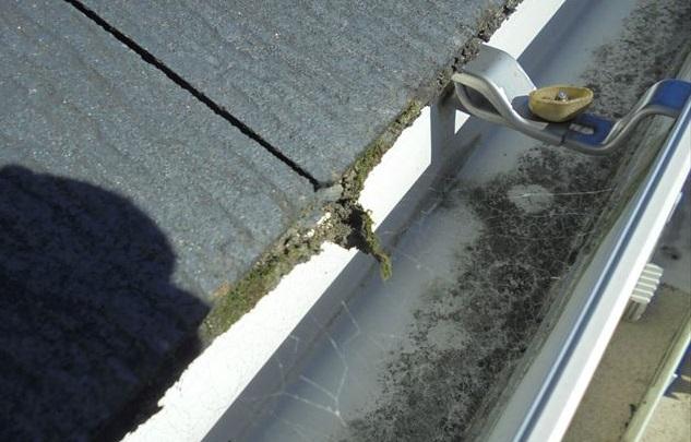 屋根に発生した苔