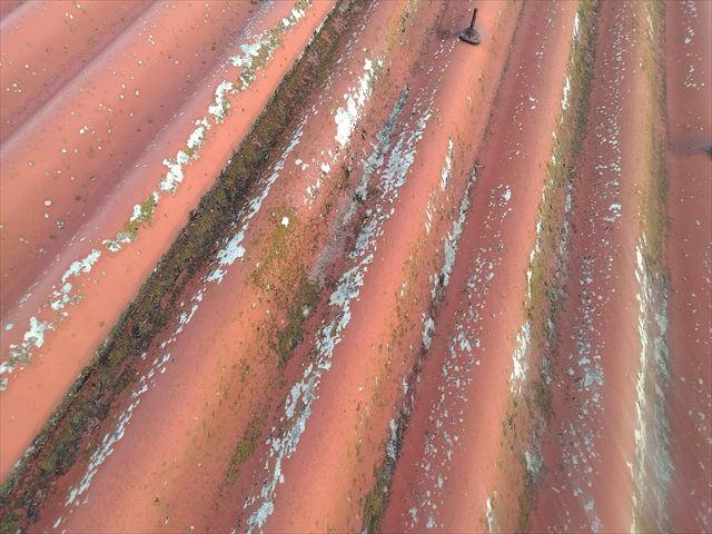 表面のカビ・苔