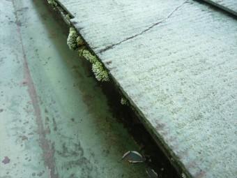 軒先に苔の塊