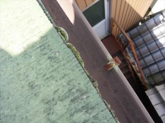 軒先に苔の発生