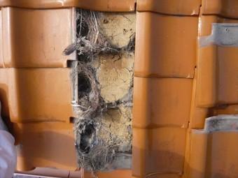 瓦の下に鳥の巣