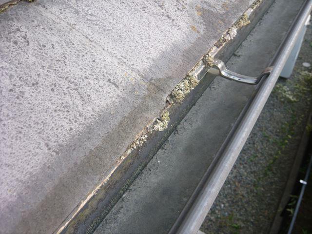 下屋根の苔