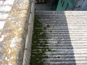 段差部分の苔