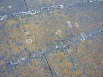 下屋根のカビ・苔