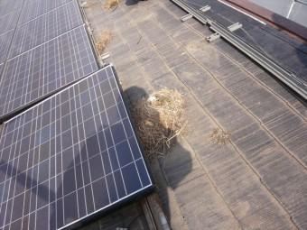 太陽光パネルを外す